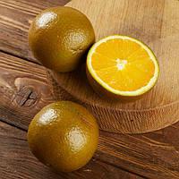 """Апельсин """"Шоколадный"""" (Navel Chocolate) до 20 см. Комнатный"""