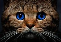 """Фотообои виниловые на флизелиновой основе """"Котёнок"""" 368х254см"""