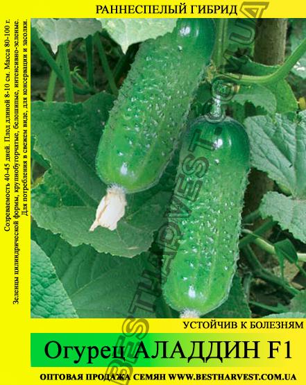Семена огурца Аладдин F1 0,5 кг