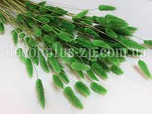 Лагурус - сухоцвет цветной, травяной (упаковка - 10 веточек)