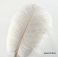 Перо страуса 25-28 см, белое