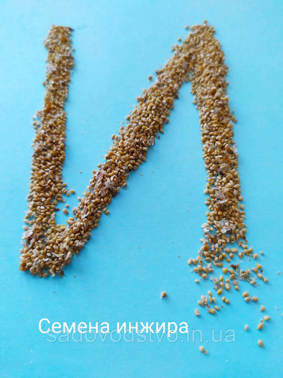 Набор семян инжира № 1