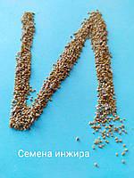 Набор семян инжира № 1, фото 1