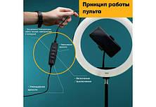 Кольцевая LED лампа LC-330 (1 крепл.тел.) USB (33см)- Новинка, фото 3