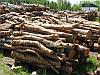 Реализуем дрова сосны 0682936411, 0957019129, 0634567594