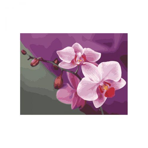 "Картина по номерам ""Розовые орхидеи"" КНО1081"