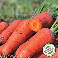 Морковь Эмперор F1 Оранжевый Семена Florium