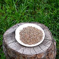 Укроп семена, фото 1