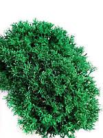 Стабилизированный мох Ягель Украинский Изумрудный 500 г Green Ecco Moss