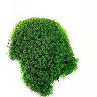 Стабилизированный мох Зеленый Ягель Украинский 1 кг Green Ecco Moss