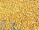 Хотите получить качественный рацион - тогда комбинируйте зерновые культуры