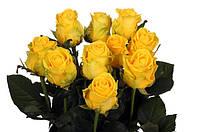 Желтая роза Пенни Лейн. Новинка!