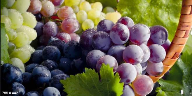 Ароматизатор «Виноград» для слайма, 5 мл, фото 2