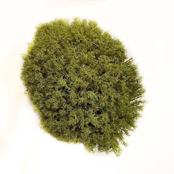 Стабилизированный мох Хаки Ягель Украинский 100 г Green Ecco Moss