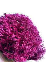 Стабилизированный мох Малиновый Ягель Украинский 250 г Green Ecco Moss