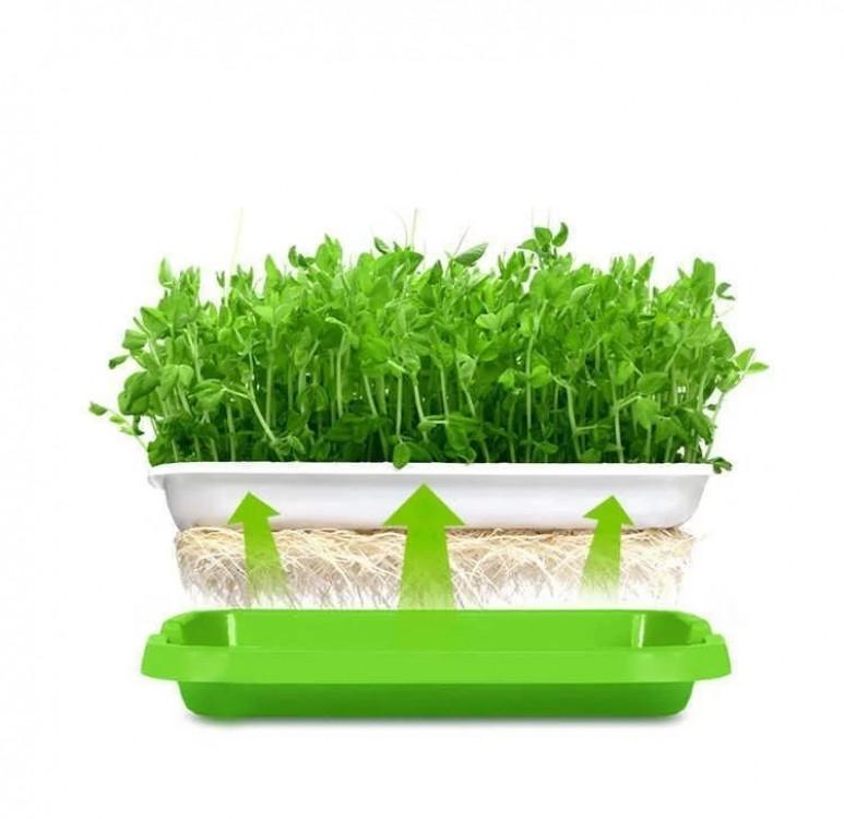 Лоток для гидропонного выращивания растений