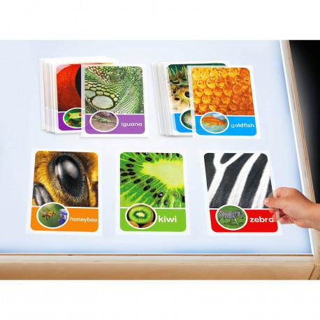 """Набір слайдів для світлового столу """"Все про природу"""" Lakeshore"""