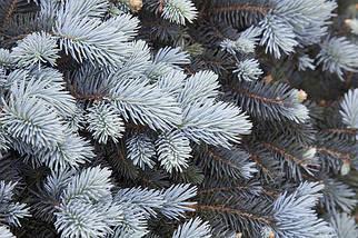 Новогодняя искусственная литая ель 2,3 метра Буковельская голубая, фото 2