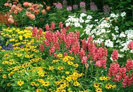 Многолетники для цветников и рокария