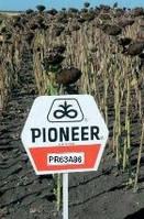 Гибрид подсолнечника Пионер ПР63А86  (Pioneer  PR63А86)
