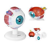 Анатомічні моделі людського ока з елементів очей 6:1