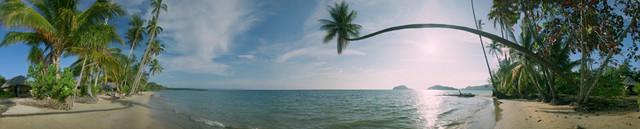 изображение пальмы для кухонного фартука 4