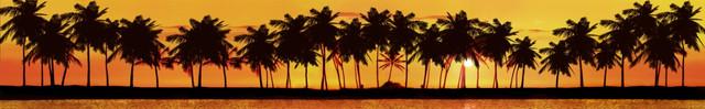 изображение пальмы для кухонного фартука 11