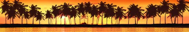 изображение пальмы для кухонного фартука 12