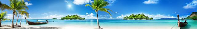 изображение пальмы для кухонного фартука 22