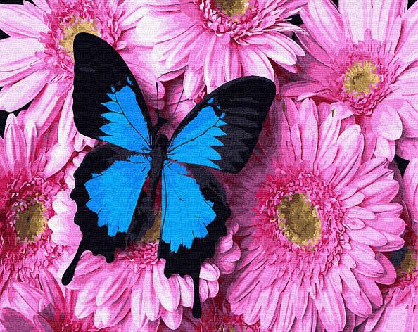 Картина по номерам 40х50см. Метелик на рожевих хризантемах GX34056 Brushme, фото 2