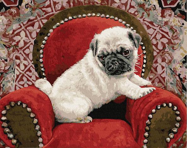 Картина по номерам 40х50см. Мопс на своєму троні GX32518 Brushme, фото 2