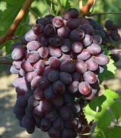Саженцы винограда Айгезард