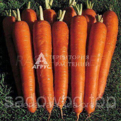 Морковь Красный великан (20 г). Предварительный заказ, отправка весной 2021г.