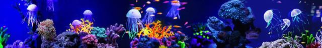 картинки медуз для фартука 3