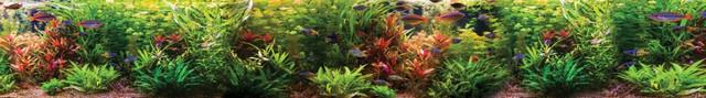 изображение рыбок для фартука 3