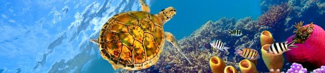 картинка черепахи для фартука