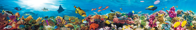 картинка тропических рыбок для фартука