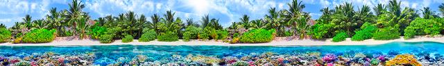 картинка тропических рыбок для фартука 3