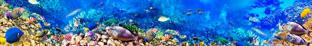 картинка тропических рыбок для фартука 4