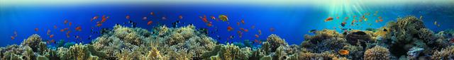 картинка тропических рыбок для фартука 5