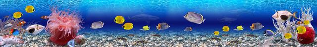картинка тропических рыбок для фартука 10