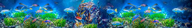 картинка тропических рыбок для фартука 12