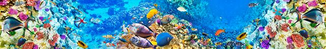 картинка тропических рыбок для фартука 13