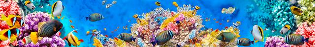 картинка тропических рыбок для фартука 14