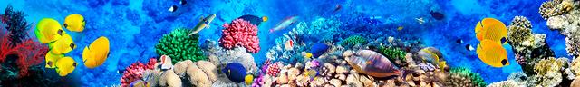 картинка тропических рыбок для фартука 16