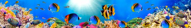 картинка тропических рыбок для фартука 17
