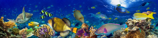картинка тропических рыбок для фартука 18
