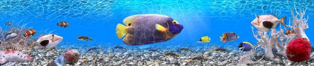 картинка рыбки для фартука 77