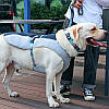 Шлея для собак TUFF HOUND TH00204 Blue S летняя дышащая, фото 4
