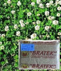 Семена Клевер белый низкорослый Huia (Хайа) 0,5кг